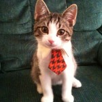 Cat wearing tie
